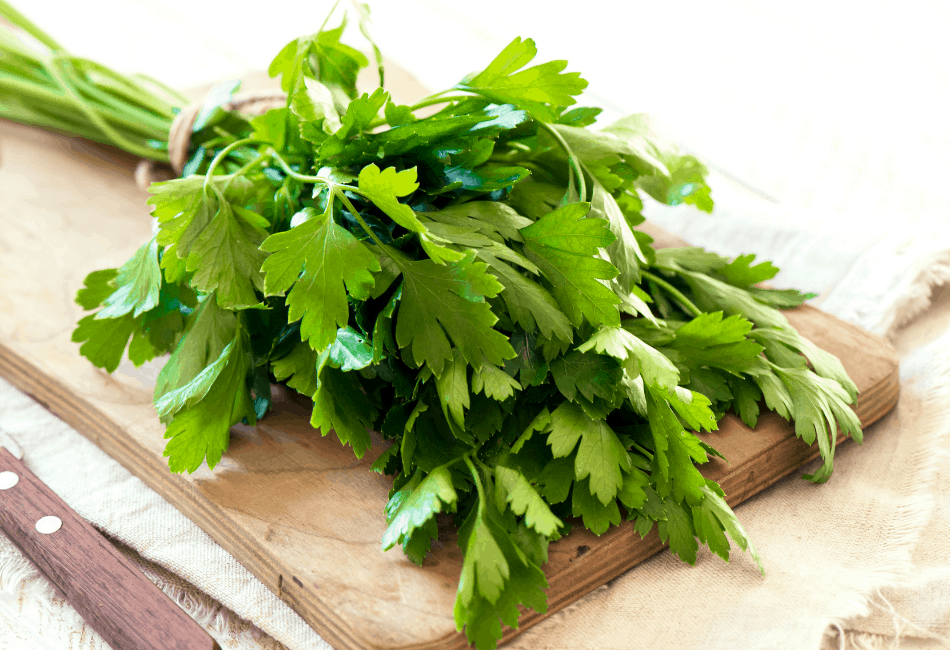bearded dragon parsley