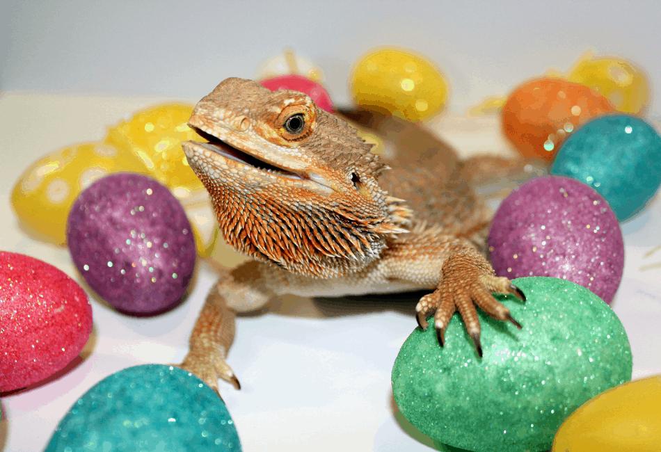 happy bearded dragon