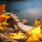 bearded dragon posing with leaves