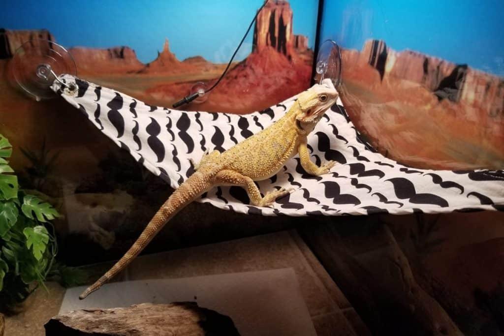 how to make a bearded dragon hammock