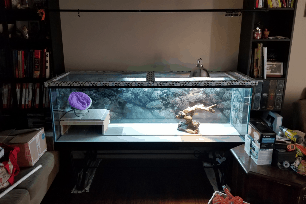 how big of a tank does a bearded dragon need