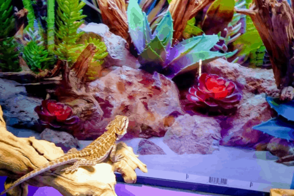 best background for a bearded dragon