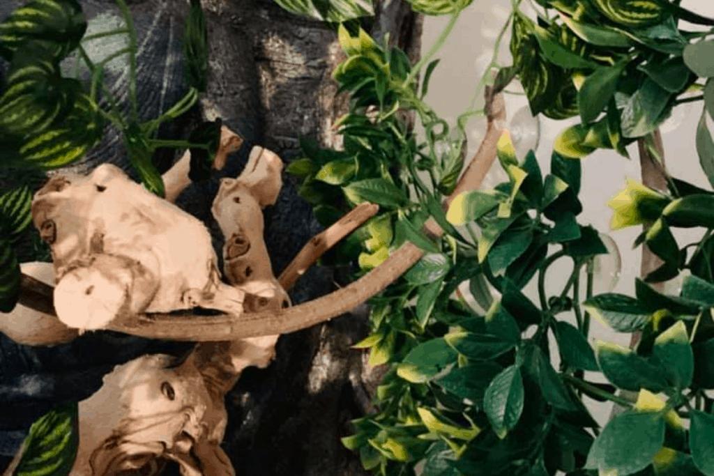 best bearded dragon branches for vivarium