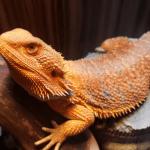 best dehumidifier for bearded dragon