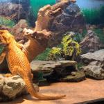 best insulation for bearded dragon vivarium