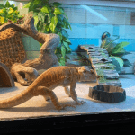 how to take care of a sick bearded dragon