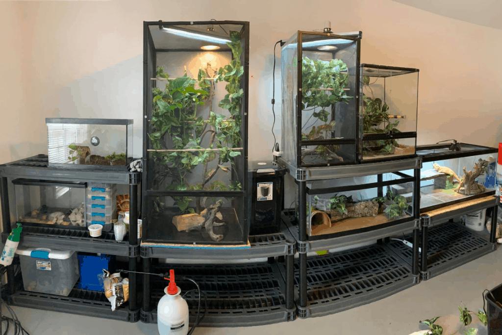 5 Best Chameleon Cages