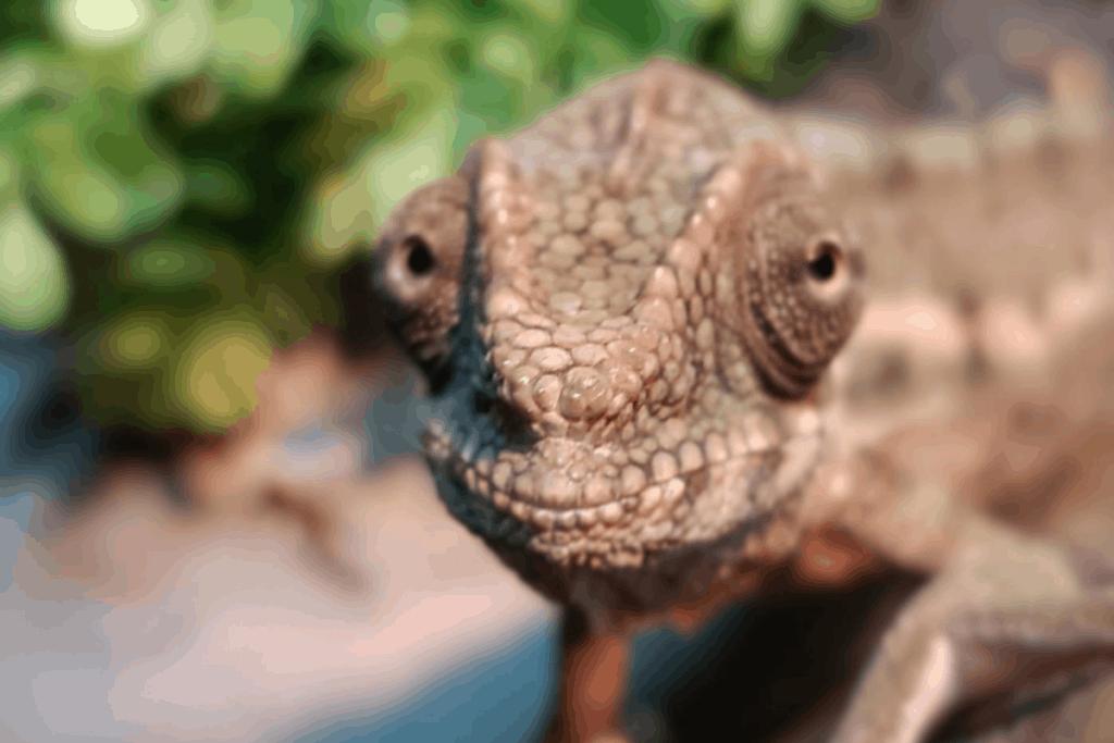 how do chameleons see