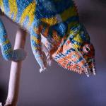 best uvb bulb for chameleons