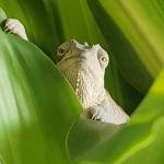 best substrate for chameleons