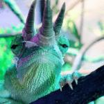 what vegetables can chameleons eat