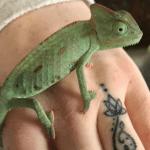 best chameleon names