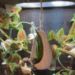 best mesh for chameleon cage