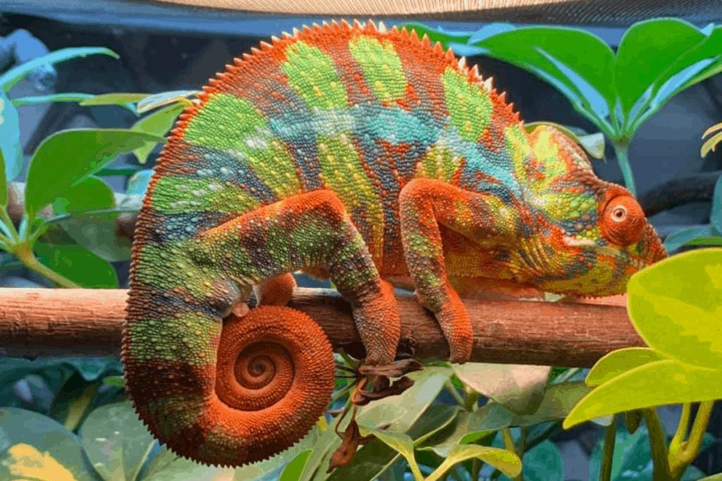 how fast do chameleons change colors