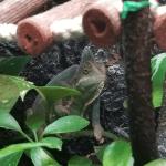 best misting system for chameleons