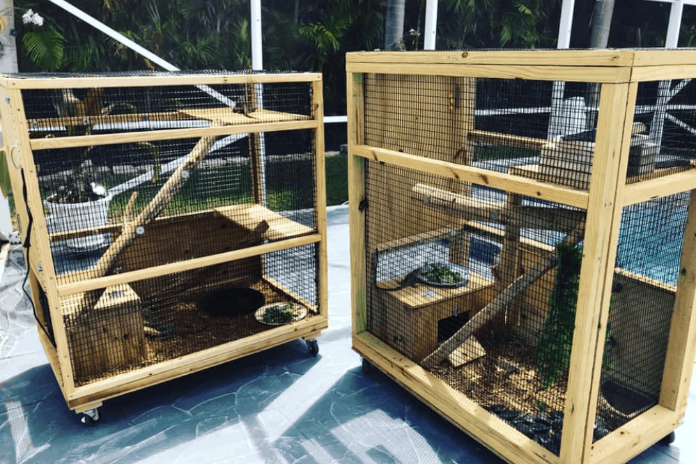 how to make an iguana cage