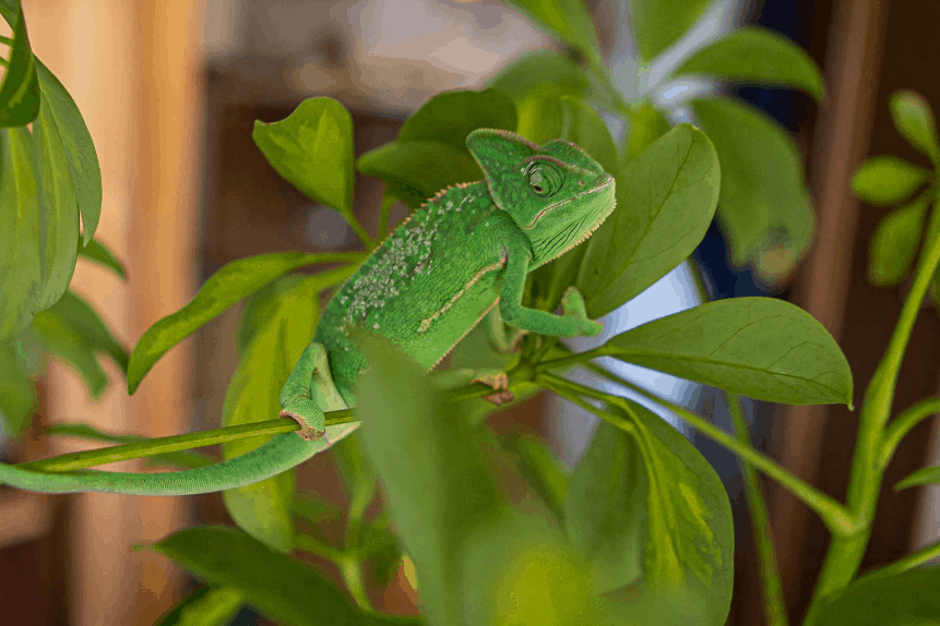 best artificial vines for chameleon