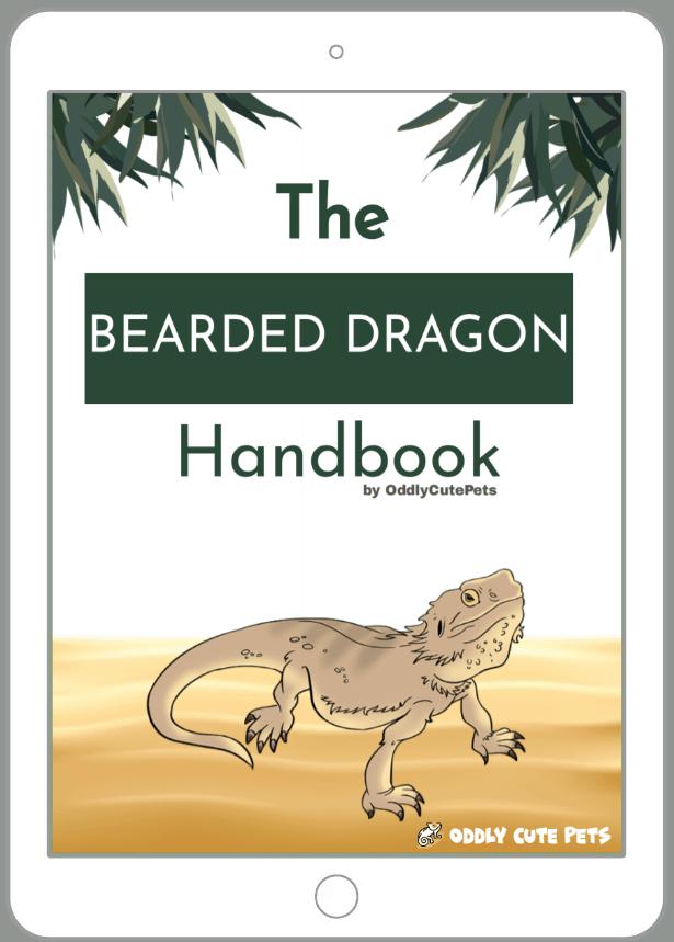 bearded dragon handbook