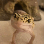 what does a leopard gecko eat