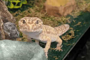 best leopard gecko starter kit
