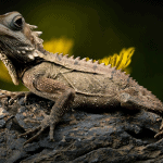 how much money do reptile breeders make