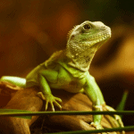 how to keep humidity up in reptile tank