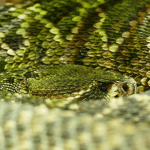 what are reptile scales made of