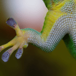 what reptile likes to be handled