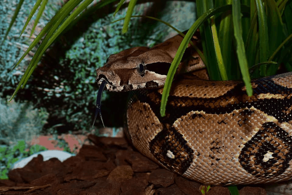 what do i need in a tank for a boa constrictor