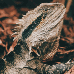 how to euthanize a reptile at home