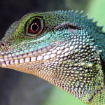 how to get rid of reptile mites