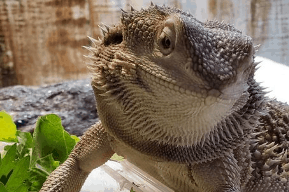 how to attract lizards to your yard