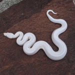 what eats snakes