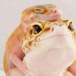best leopard gecko names
