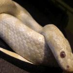 how do snakes catch their prey