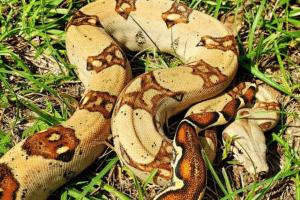 where do snakes go when it rains