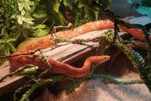 how fast do snakes grow