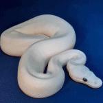 what do newborn snakes eat