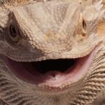 what is a lizard's defense mechanism