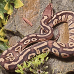 how do snakes protect themselves