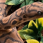 how many babies can snakes have