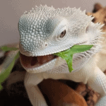 can bearded dragons eat spiders
