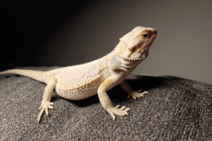 are bearded dragons good with children