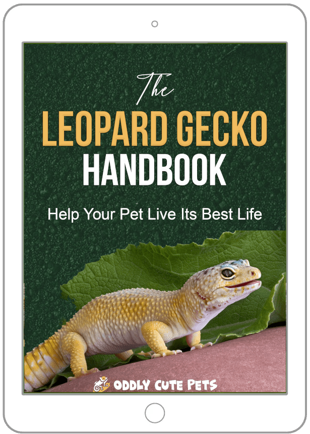 Ebook Device Leopardgecko