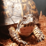 best bedding for box turtles