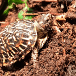 safe plants for box turtle habitats
