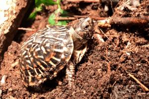safe plants for box turtle habitats