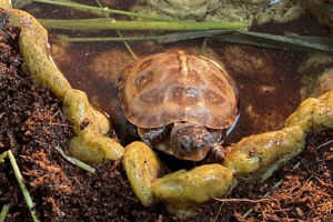 best food for box turtles