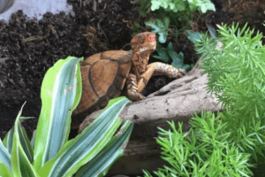 what to put in a box turtle tank