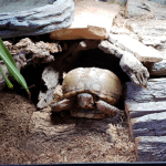 can box turtles eat blueberries